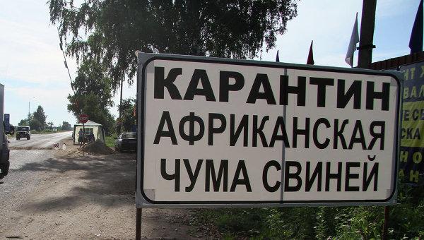 В Іванівському районі оголошено карантин через африканську чуму свиней: продаж свинини заборонено